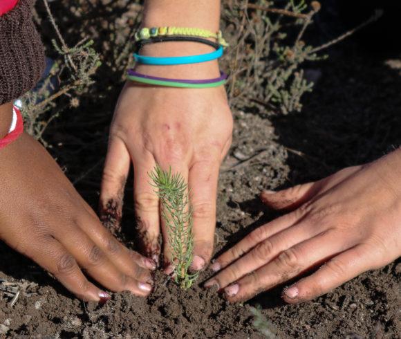 Conservation of Elim Ferricrete Fynbos
