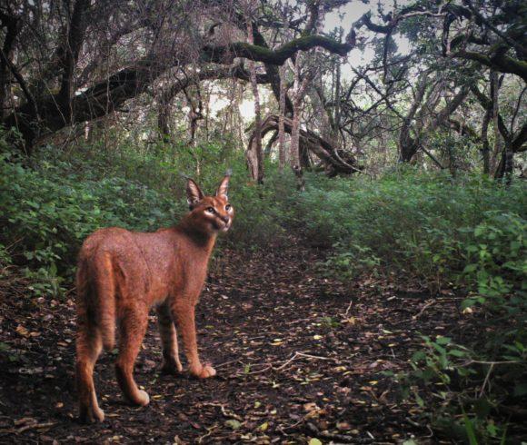 Wildlife monitoring