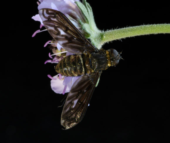 Research & Entomology Projects